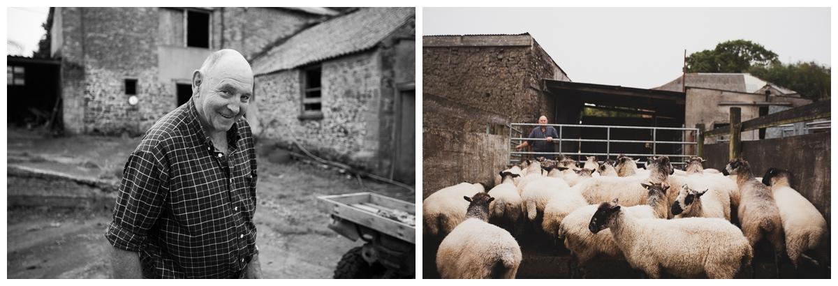 felted sheepskins mashams